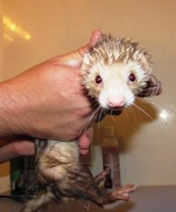 Marceline's first bath