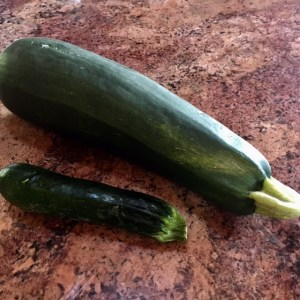 spotlight on zucchini