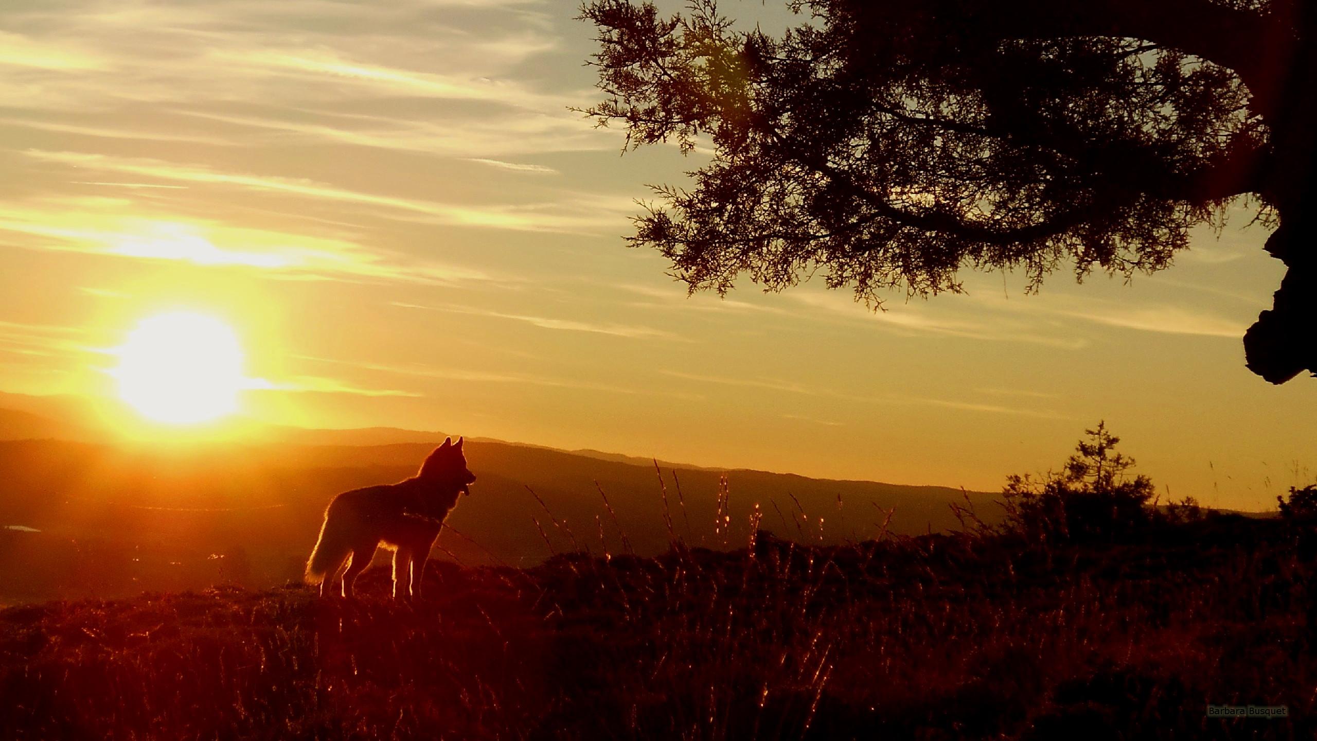 Fall Hills Wallpaper Sunset Desktop Backgrounds Barbaras Hd Wallpapers