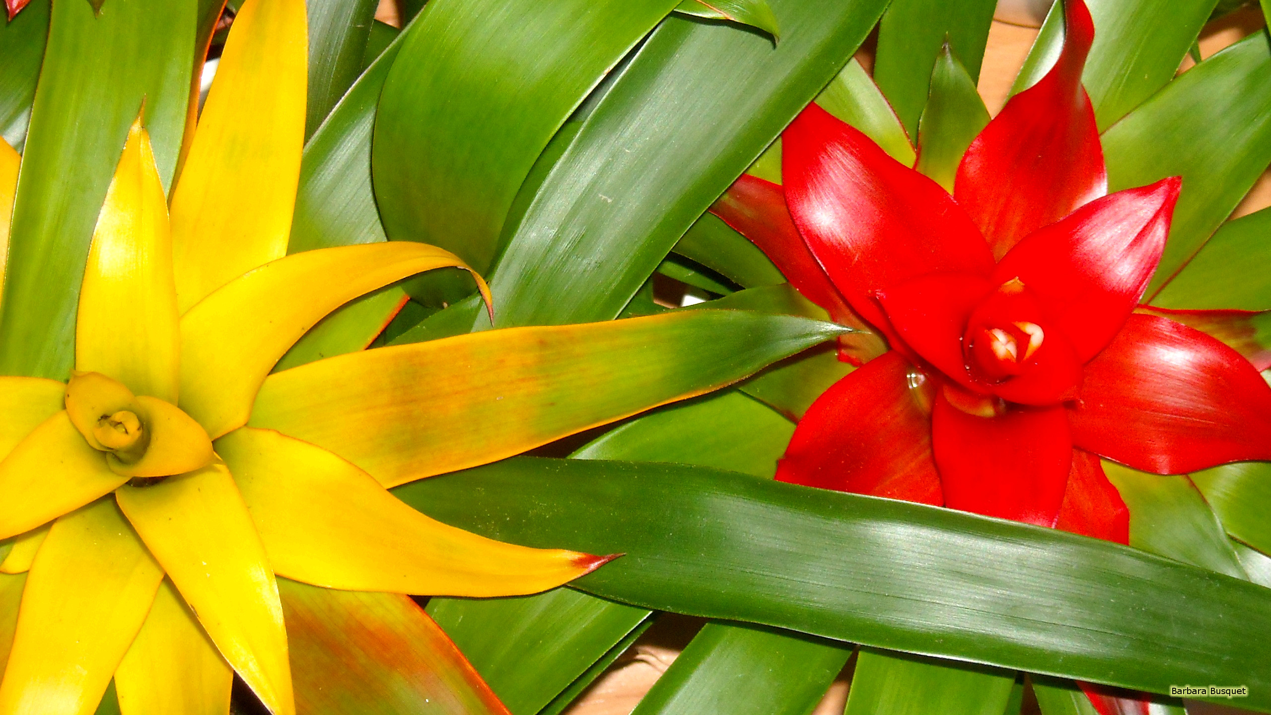 Fall Flowers Computer Wallpaper Tropical Plants With Colored Leaves Barbaras Hd Wallpapers