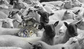 sheepwolv