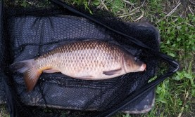 My biggest river carp, 9.00, Kennet, June 2013
