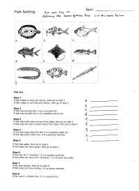 Dichotomous Key Worksheets Middle School. Dichotomous ...