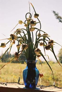 Garlic Scape Bouquet