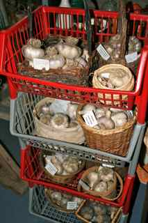 More baskets of garlic