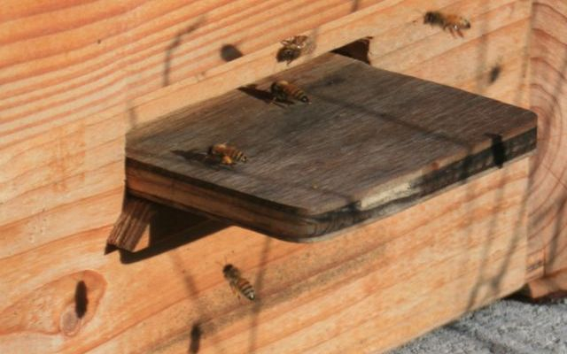 December Bees