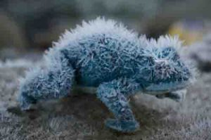 Frosty toad