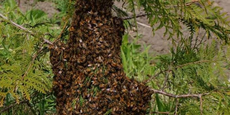Swarm Alert!
