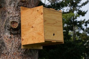 bee swarm box