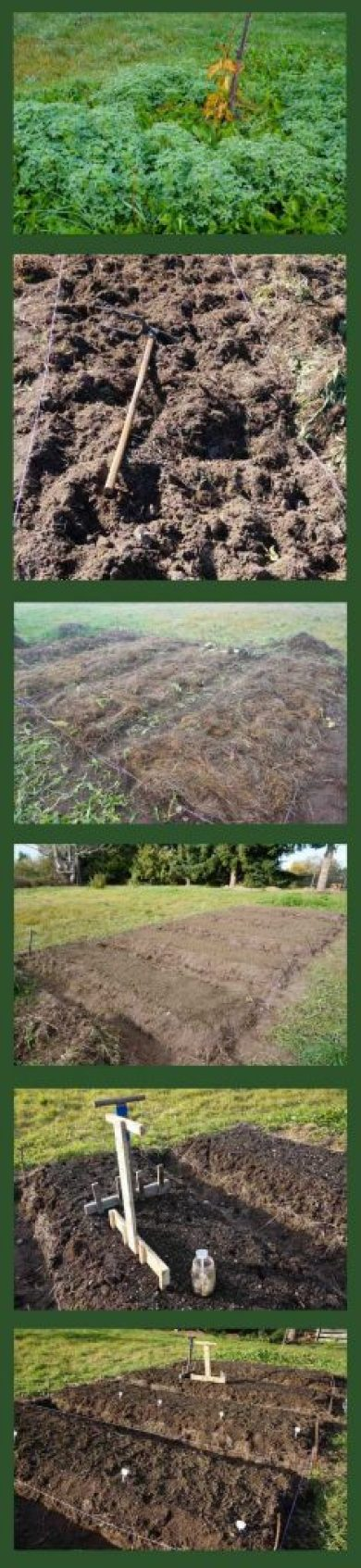 Garlic Bed Prep & Plant