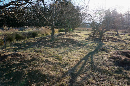 To Convert an Orchard to a Food Forest, Start with the Soil