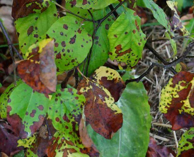 Good Fungi vs Bad Fungi, Molds, Mildews, and Blights