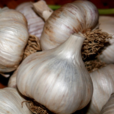 Looking for really great garlic?