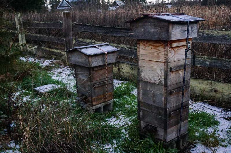 Beehives in January