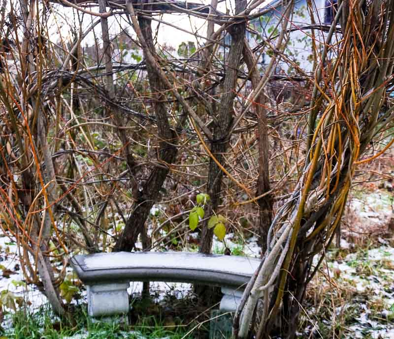 A Cold Bench at the Willow Chair