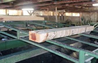 log freshly cut at Dingess Lumber Co.
