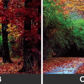 Diferențele dintre culorile CMYK vs. RGB Barbu Iulian