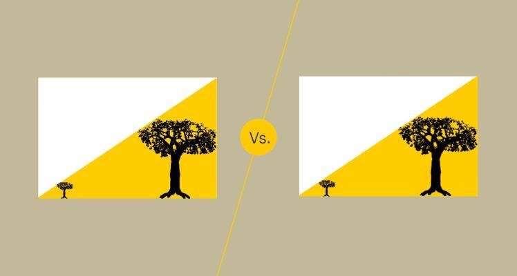 Grafica vectorială și grafica raster Barbu Iulian