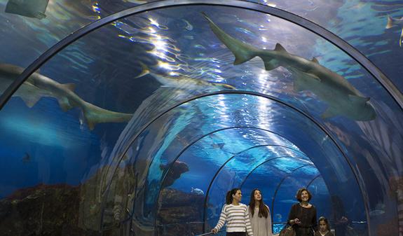 Akwarium w Barcelonie - Bilety i wycieczki online - Barcelona