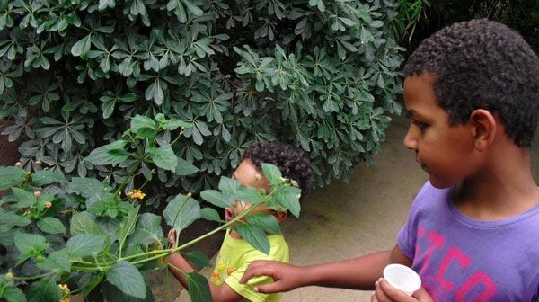 Butterfly park for kids