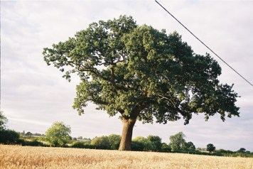 The perfectly shaped tree