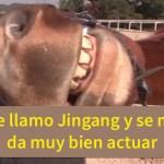 jingam2