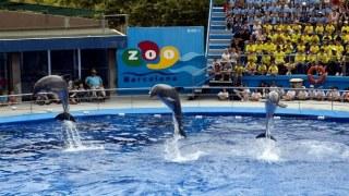 zoo barcelona portada