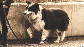 perros en la calle