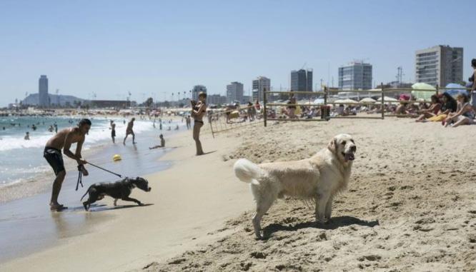 perros en Barcelona