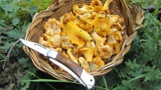 cesto-con-setas-comestibles