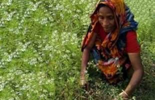 একজন আত্মনির্ভরশীল নারী সাফিয়া বেগম