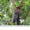 সাতক্ষীরায় গাছে গাছে মাটির ভাড় বেঁধে পাখিদের 'অভয়াশ্রম' তৈরির উদ্যোগ