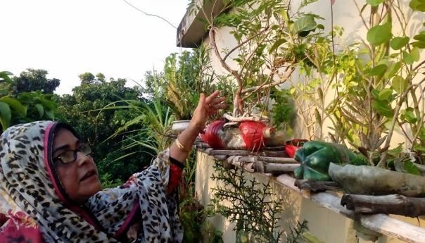 সাতক্ষীরার এক বৃক্ষপ্রেমী নারী ফারুকি নাজনীন