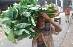 পুষ্টিগুণ সমৃদ্ধ কচু শাকের যোগানদাতা মেছের শাহ্ ভুগছেন অপুষ্টিতে