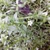 গিমা শাকের নানান গুণাবলী