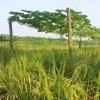 দোতলা কৃষি প্রযুক্তির উদ্ভাবক জাফর সাদেক