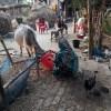 প্রাণবৈচিত্র্য টিকিয়ে রাখতে অবদান রেখেছে গ্রামীণ নারী