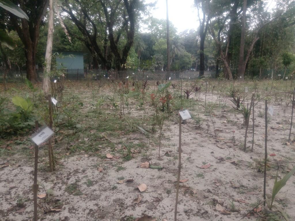 Medicinal Tree Park (3)