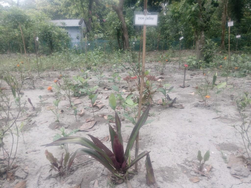 Medicinal Tree Park (4)