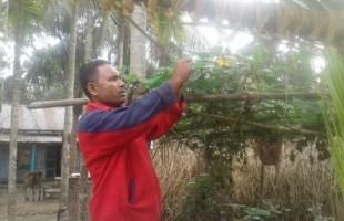 পরিবেশবান্ধব কৃষি চর্চাকারী আবুল কালাম মিয়া