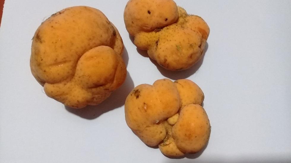 Debu Fruit 3