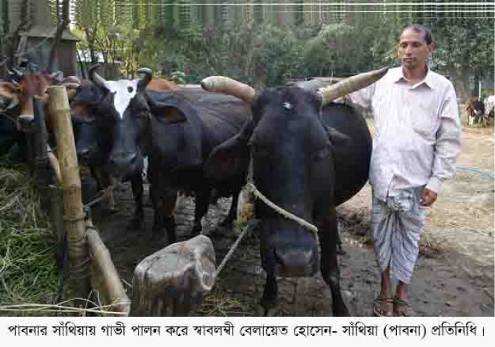 Santhia Cow Image