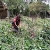 কৃষি প্রাণবৈচিত্র্য সুরক্ষায় অমিতা রানীর  উদ্যোগ