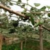 পটল চাষে লাভবান চরের কৃষক আফছার আলী