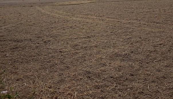 বরেন্দ্র অঞ্চলের মাটি কালচে হলদের ঘাঁটি ও উর্বরতায় খাঁটি