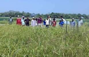ধানের বিকল্প ফসল খুঁজে পেয়ে হাওরাঞ্চলের কৃষকরা খুশি