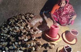 স্থানীয় গলাছেলা মুরগি চাষে নাজমা বেগমের  সফলতা
