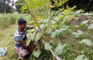 করোনাতে কৃষকরাও সম্মুখ যোদ্ধা