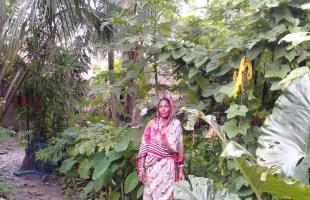 পুকুরে সবজি চাষে আশার আলো দেখছেন তরুলতা গাইন