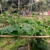 শতবাড়ির কৃষক মামুন মিয়ার যত শখ